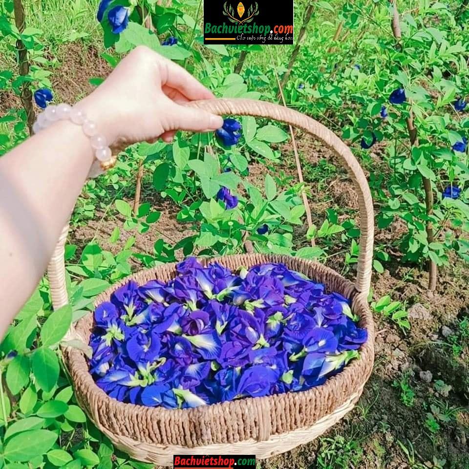 trà hoa đậu biếc sấy lạnh đến từ trang trại hữu cơ The Moshav Farm